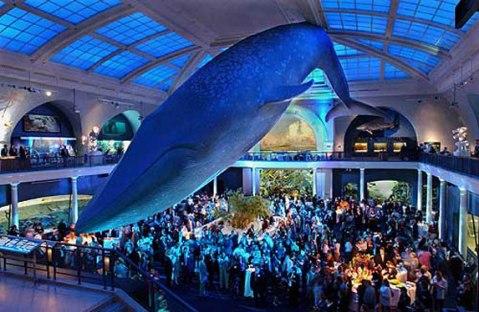 museu de historia natural nova york