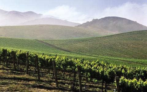 vinicola california